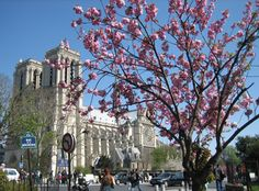 """""""When spring comes to Paris the humblest mortal alive must feel that he dwells in paradise.""""HENRY MILLER"""