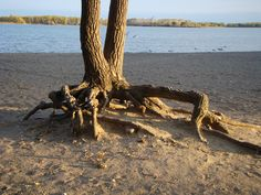 the strenght of the roots.