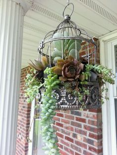 Birdcage with succulent plants