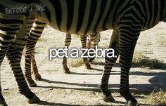 i love Zebras :)