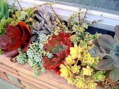 Multicolor succulent window box