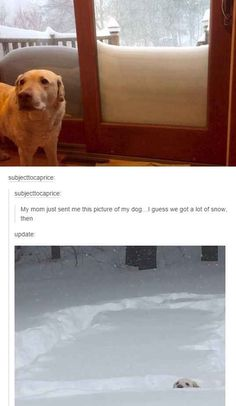 This snowy dog.