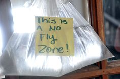 This is an awesome post about how to keep flies away with a penny and a bag of water - and why it works. Gotta try it!