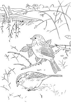 Lark Bunting and Columbine Colorado State Bird and Flower