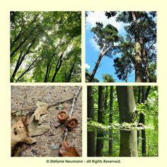 #KBFWalk: EIN AUGUSTSPAZIERGANG IN 3 AKTEN. 3. Akt: Begegnungen im #Wald. | #KokopelliBeeFree #KBFPhotography #August #Herbst