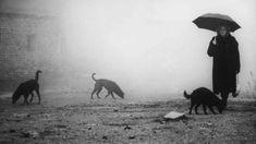 'Perdizione' (1988); regia: Béla Tarr. Titolo originale: 'Kárhozat'