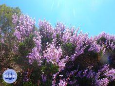 - Zorbas Island apartments in Kokkini Hani, Crete Greece 2020 Crete Greece, Island, Tips, Plants, Islands, Plant, Planets, Counseling