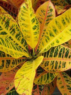 Benefits of Blood Meal, Nitrogen and Potassium for Plants. #plants #gardening