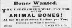 """""""Bones Wanted. The undersigned will pay for lots of animal bones! At the rate of seven dollars per ton, delivered on the wharf in Honolulu. H. Hackfeld & Co.""""  Animal Bones The Pacific commercial advertiser, June 8, 1867, Image 3 http://chroniclingamerica.loc.gov/lccn/sn82015418/1867-06-08/ed-1/seq-3/"""