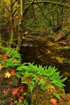 Goldstream by Ingrid Lamour on 500px