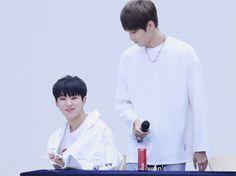 Hoshi and Wonwoo