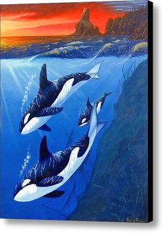 Killer Whale Canvas Print of painting By Barry Dumaw  Prints starting at $42
