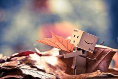 Danbo in autumn