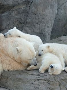 """THATS a real """"family cuddling""""!!!"""