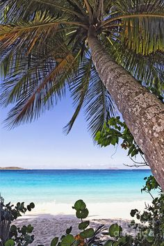 ✯ Leaning Palm Tree on a Caribbean Beach, Trunk Bay, St John, US Virgin Islands