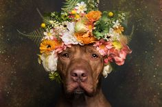 Picture of a pit bull with flowers