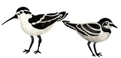 Create and paint a nautical themed design in your home with our Shorebirds Stencil!