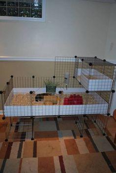 Georgie Girl & Possums New C&C cage