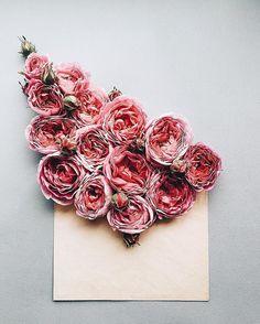 Roses ✉️
