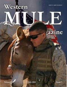 Military mules  Two of my favorite animals... A mule and a U.S. Marine !