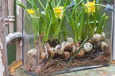Gör ett påskägg i gips Terrarium, Plants, Inspiration, Home Decor, Craft Ideas, Gardens, Houses, Garden Deco, Fence