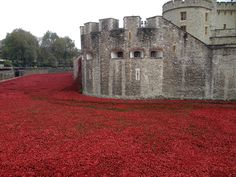 "Art installation at the Tower of London, called 'Blood Swept Lands and Seas of Red'. Commemorating the centenary of World War I. The ""Ode of Remembrance"" is an ode taken from Laurence Binyon's poem, ""For the Fallen"", which was first published in The Times in September 1914. ""Lest we forget"".  Katrina©B"