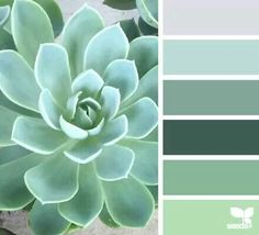 Succulent tones......