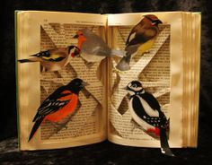"""Made from """"The Personality of the Bird"""". Starting at one o'clock they are the Cedar Waxwing, Giant Spotted Woodpecker, Baltimore Oriole, European Goldfinch, and the European Robin.  Book Sculpture by wetcanvas.deviantart.com on @deviantART"""