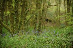 Forest & Lough – Tea and a camera County Cork, Cork Ireland
