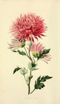 botanical | Pinterest: Natalia Escaño