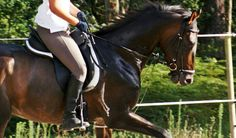 My cute horse