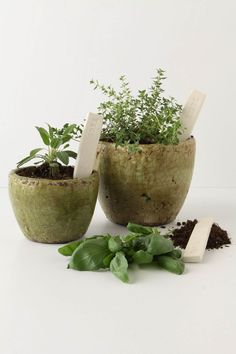 Herb markers from Anthropologie - set of 3 $9.95