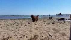 Strand #SignoraRuth Am Meer, Beach, Water, Outdoor, Nature Reserve, Vacation, Pet Dogs, Animals, Water Water