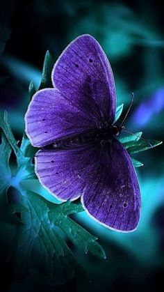 Cool Phone Wallpapers with glowing Blue Butterfly in the Dark