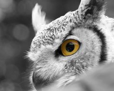 Gorgeous owl   http://angelomichel.deviantart.com/art/Owl-86461426