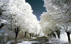 Украинский фотограф Олег Стельмах, иначе Elektraua, использует инфракрасную съемку, чтобы преобразовать обычные пейзажи в гипнотические пространства белой, ледяной листвы. Есть что-то очень волшебное в этом наборе инфракрасных изображений.