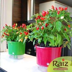 3 vasos auto irrigável médio 14cmx16cm cores plantas