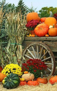 Autumn garden harvest - flowers, pumpkins, mums -  fall decorating