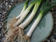 Discover how to grow various members of the onion family: bulb onions and scallions, leeks, garlic, ramps, shallots, and chives. Each one has different requirements and habits, yet all are rewarding for organic gardeners. From MOTHER EARTH NEWS magazine.