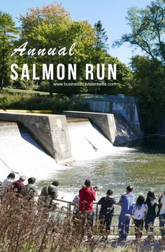 Fall has arrived and the annual salmon run has begun! Watch them jump through the fishway. (Port Hope, Ontario Canada)