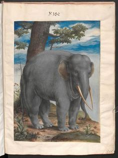 Collection of nature studies of Rudolph II