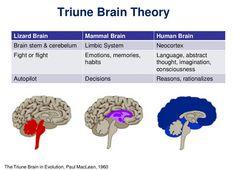 Triune Brain Theory                                                                                                                                                                                 More