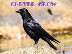 Animals are thinking, feeling beings and the words we use to describe them matters. #teachkindness #clevercrow