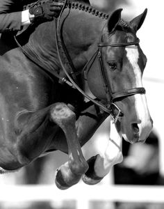 Horse power & concentration. #horse #riding http://www.annabelchaffer.com/categories/Equestrian-Gifts/