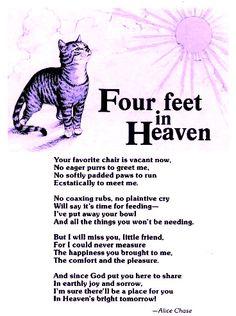 Pet Loss Rainbow Bridge Inspirational Quotes Heavens Amen Sunshine Glitter Kitty Cats Of