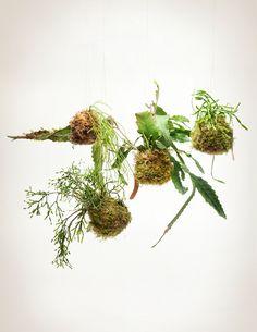 Jungle Cactus Kokedama 'String Garden'