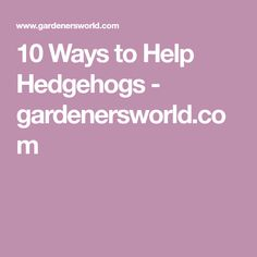 Discover 10 ways in which you can make your garden a haven for hedgehogs, in this guide from the wildlife experts at BBC Gardeners' World Magazine. Hedgehogs, Wildlife, Make It Yourself, Garden, Garten, Hedgehog, Lawn And Garden, Gardens, Gardening