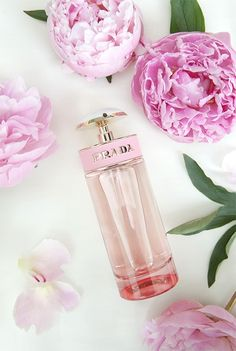 Fragrance Trend: Ros