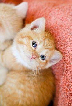 Cute Little Kitten so adoor