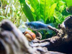 Fish & Aquariums Persevering Aquarium Aquatic Fish Tank Natural Driftwood Gold Vine To Make One Feel At Ease And Energetic